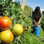 devolucion iva agropecuarios