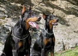 impuesto a perros