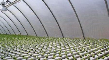 invernaderos hidroponicos